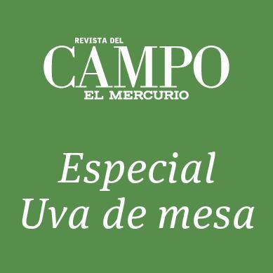 Especial Uva de Mesa Revista del Campo