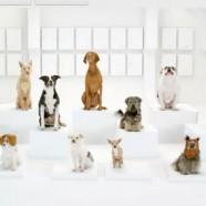 """""""The Bark Side"""": El teaser de uno de los mejores spots que veremos el  2012 a cargo de Volkswagen"""